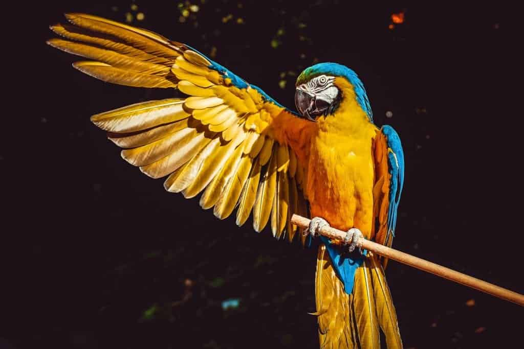 Macaw: Facts, Diet And Habitat