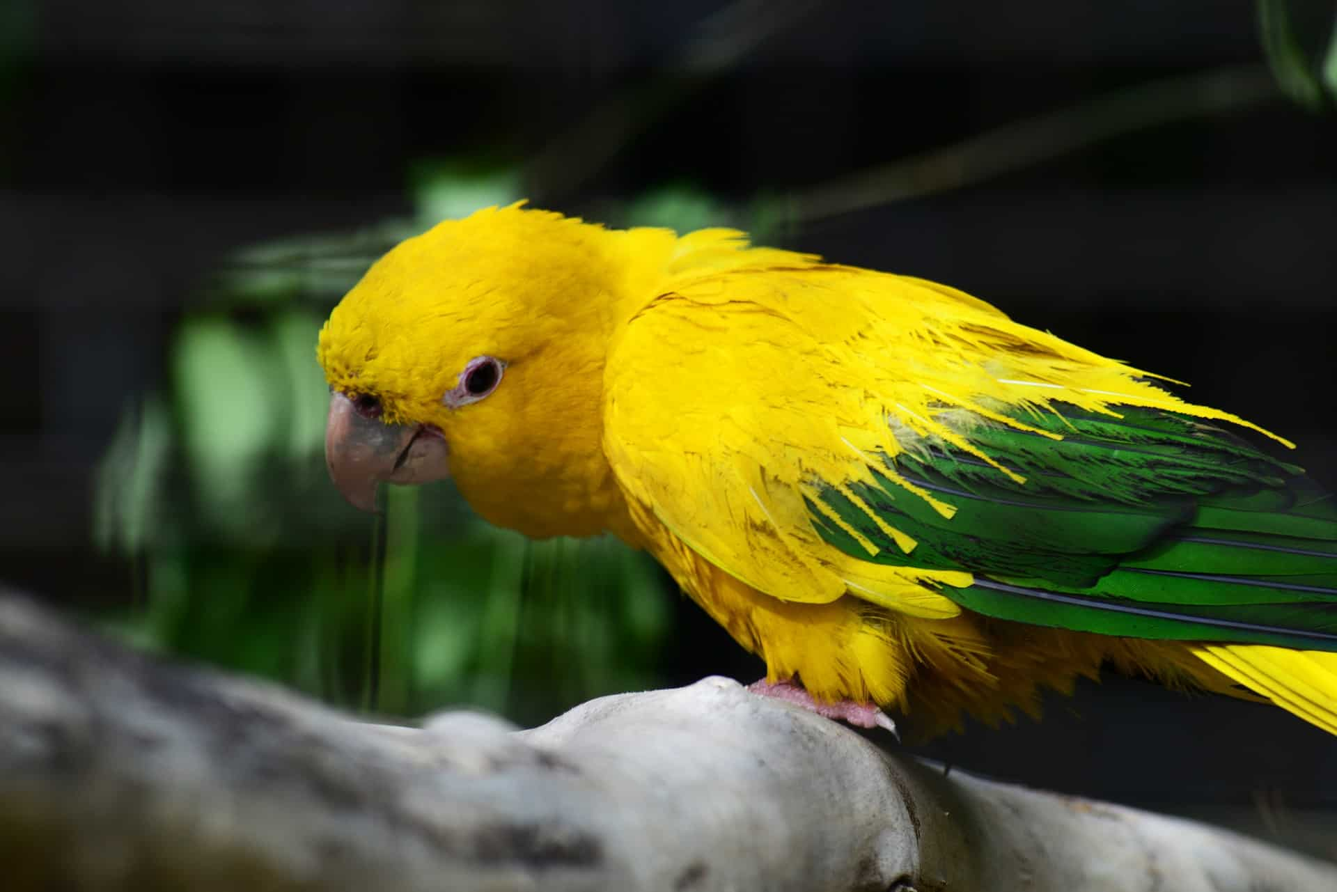 Essential Facts About Conure You Must Know