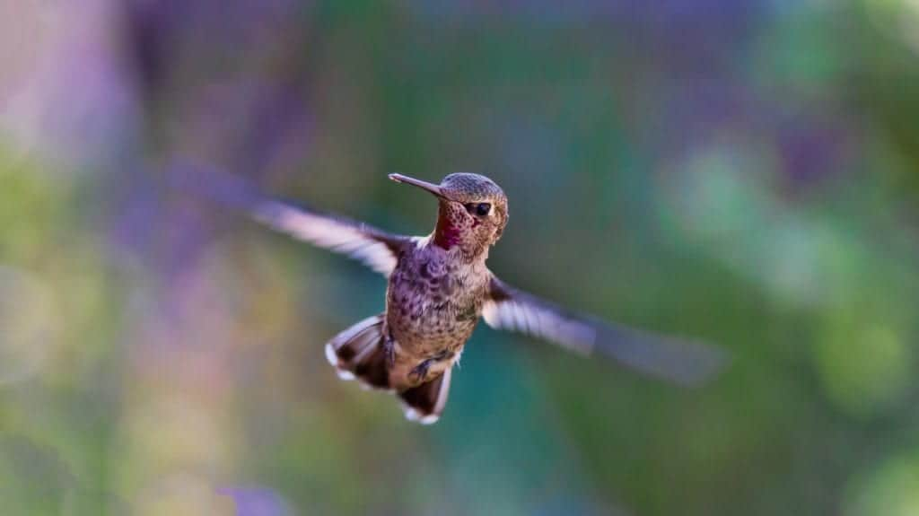 Know All About Hummingbird