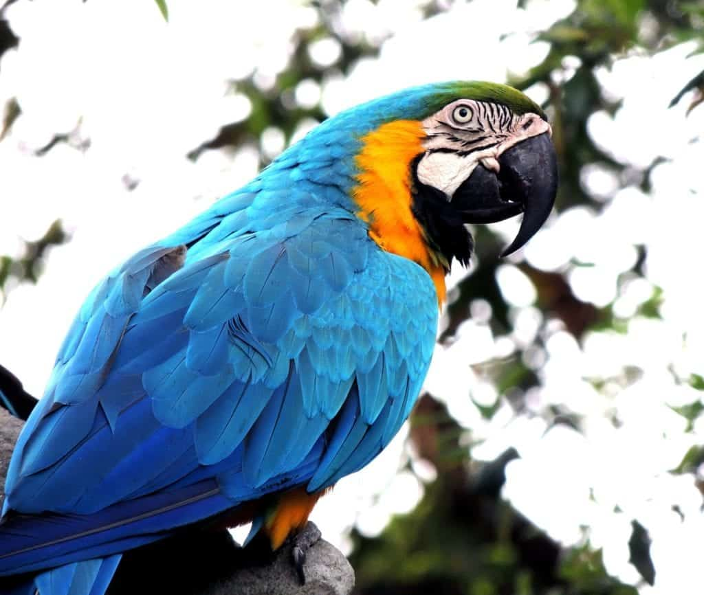 Interesting Facts About Parrot