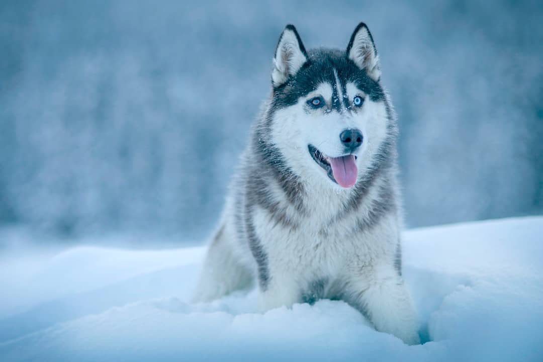 A dog sitting in the snow