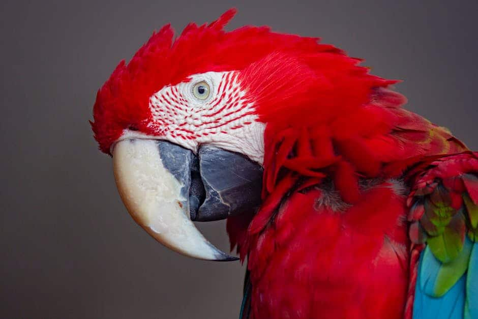 A bird sitting on top of a parrot