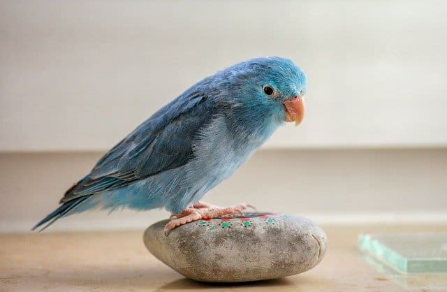 a small bird standing on a stone