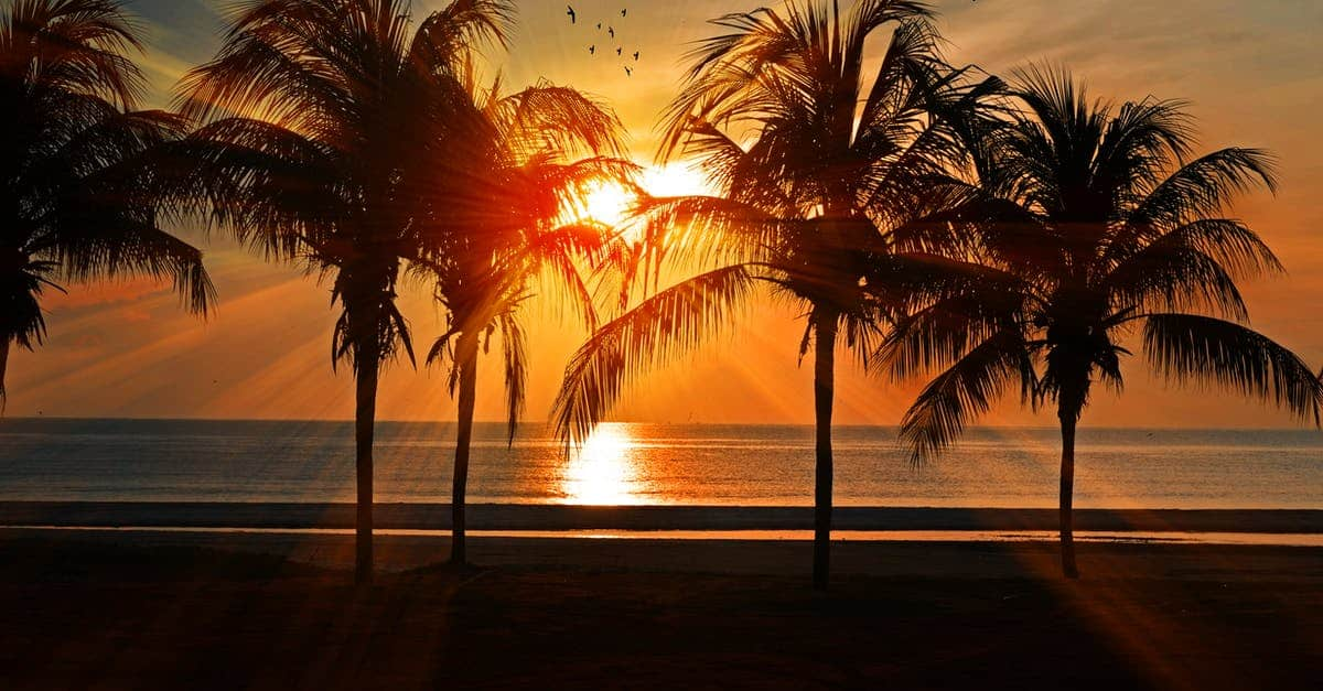 A sunset over a body of water next to a palm tree