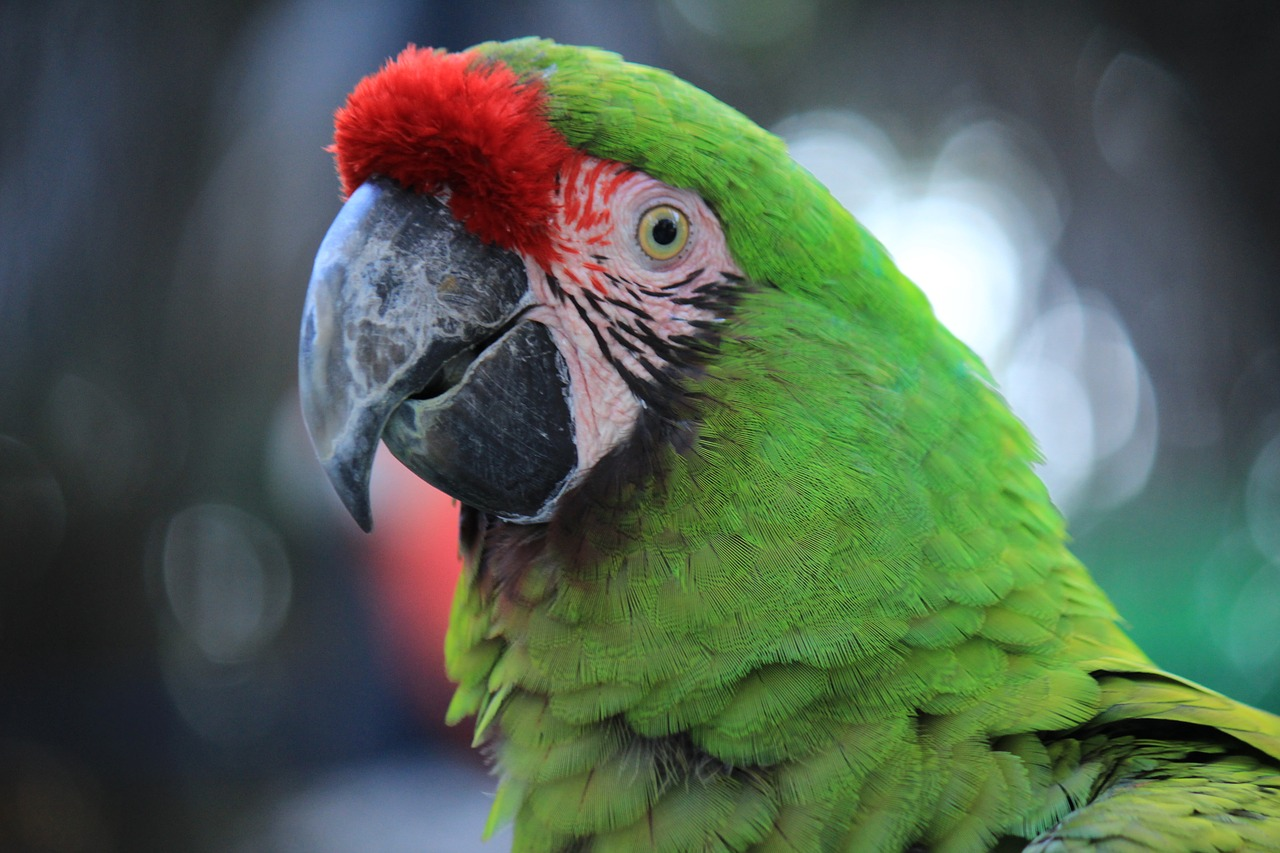 A close up of a colorful bird perched on top of a parrot