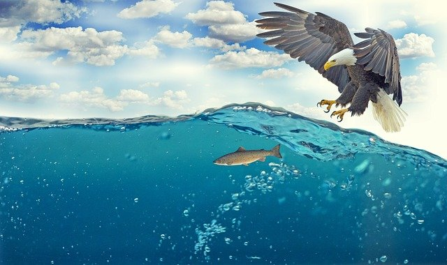A bird flying over a body of water