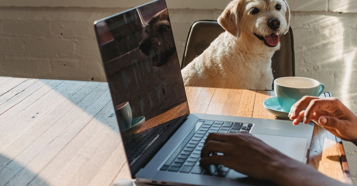 A dog in front of a laptop computer sitting on top of a table