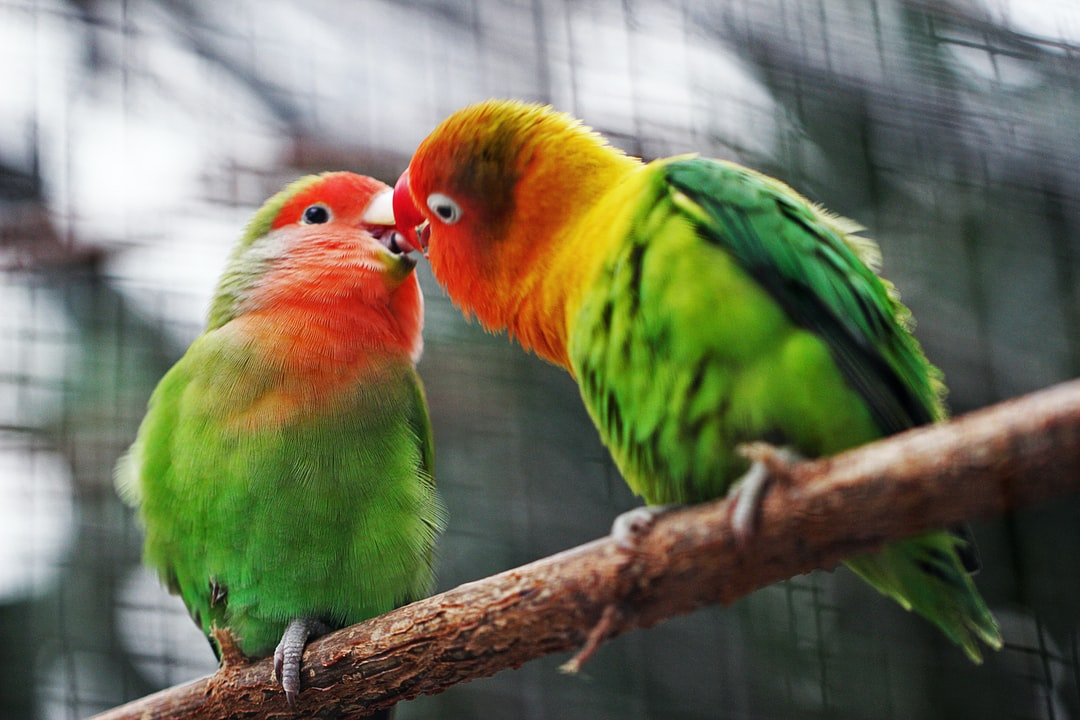 A colorful bird perched on top of a green parrot sitting on a branch