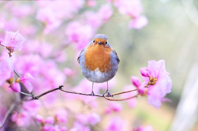 A small bird perched on a flower