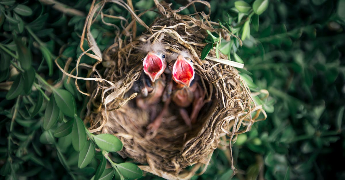 baby birds facts