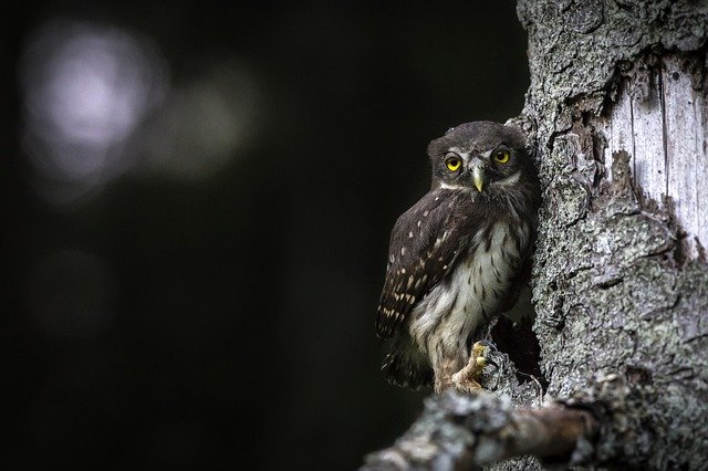 A small bird perched on top of an owl