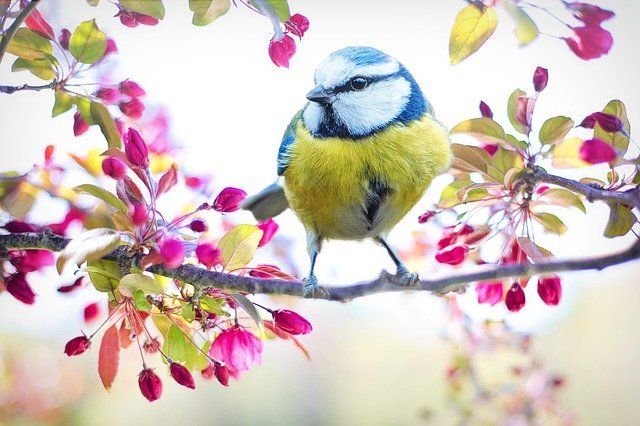 A small bird sitting on top of a flower