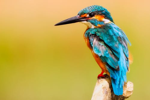 A colorful bird perched on a branch