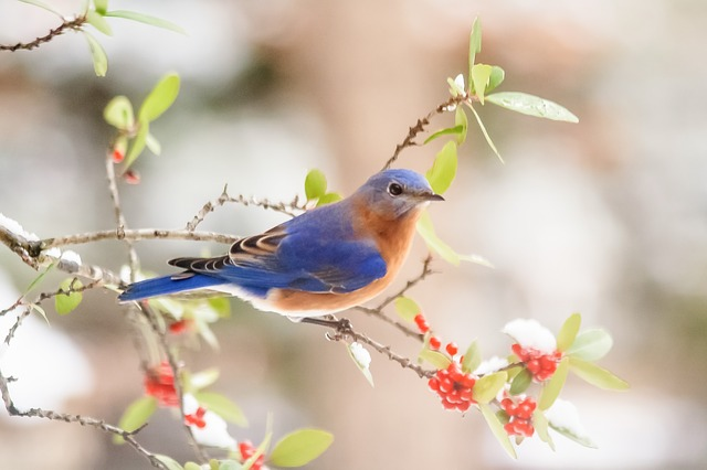 A small bird sitting on a branch