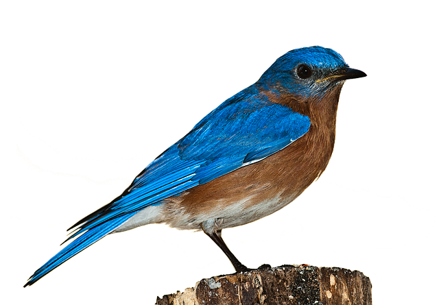 A bird sitting on a wooden surface