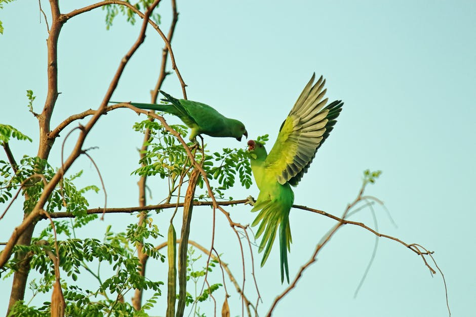 A parrot sitting on a branch